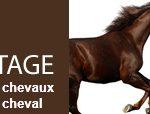 Frcourtage compare et trouve l'assurance chevaux la moins chère.