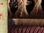 Vente de katanas importés des forges et toujours plus traditionnels