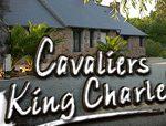 Il est temps d'adopter des chiots Cavaliers King Charles!