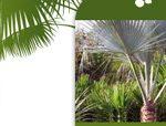 A l'ombre des figuiers est une boutique en ligne de vente et d'achat de plantes rares, exotiques ou tempérés.