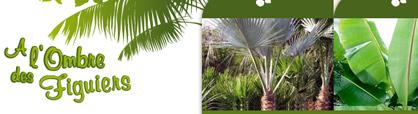 acheter des plantes rares