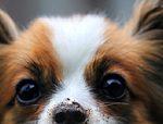 Conseils et informations sur les chiens