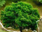 Bio : Informations et actualités sur l'écologie